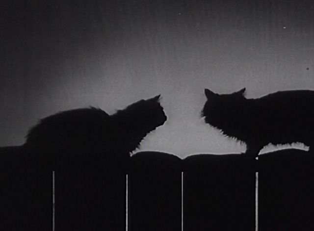 Knights on the Highway - white cat and black cat silhouette