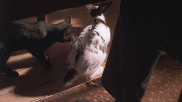 Kolya - black kitten on floor with black and white rabbit