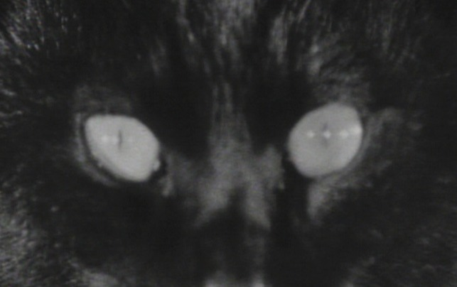 Kuroneko - close up of black cat's eyes