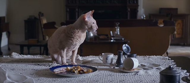 Lady Macbeth - ginger Cornish Rex cat eating from a plate on a table