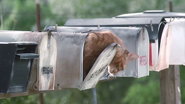 The Last Starfighter - orange tabby cat climbing out of mailbox