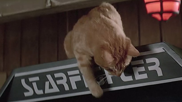 The Last Starfighter - orange tabby cat on top of Starfighter arcade game reaching down
