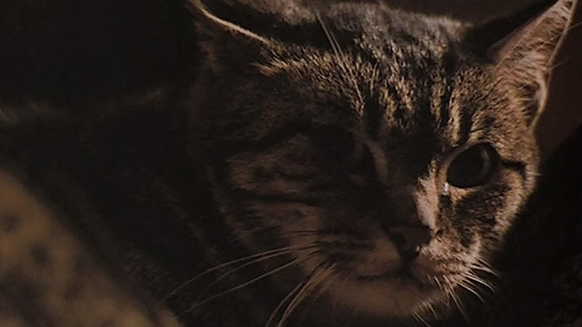 Last Tango in Paris - extreme close up of Bengal tabby cat