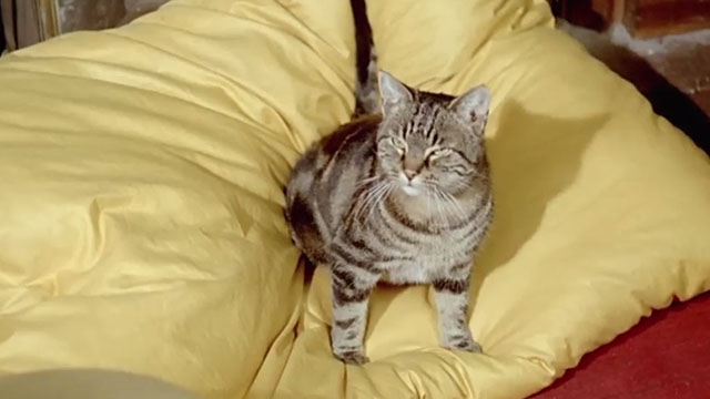 Le Chat - tabby cat Greffier sitting on pillow
