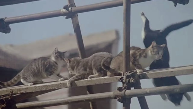 Le Chat - various cats on scaffolding