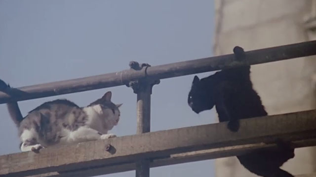 Le Chat - cats on scaffolding