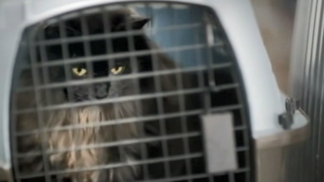 Like Cats and Dogs - long-haired black cat Mozart in carrier