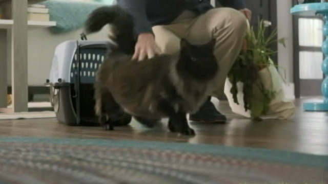 Like Cats and Dogs - long-haired black cat Mozart walks out of carrier