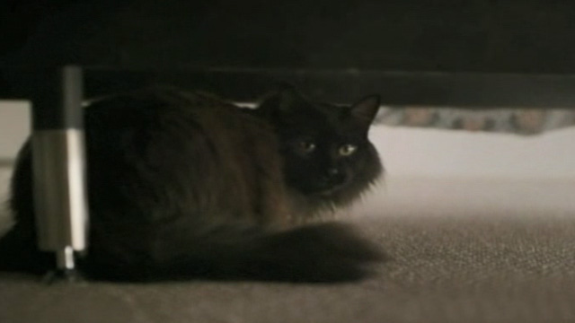 Like Cats and Dogs - long-haired black cat Mozart under bed