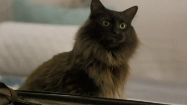 Like Cats and Dogs - long-haired black cat Mozart by suitcase