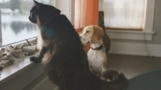 Like Cats and Dogs - long-haired black cat Mozart and beagle dog Frank looking out window