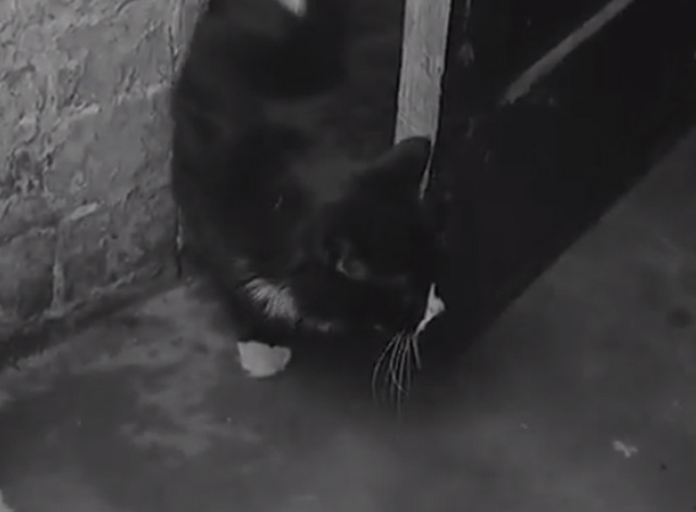 Lion Loves Our Local - tuxedo cat in doorway