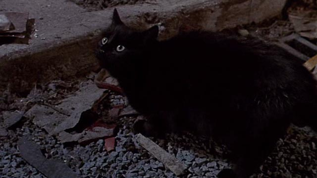 Little Shop of Horrors - black cat in street