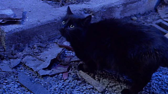 Little Shop of Horrors - black cat in street lit by lightning