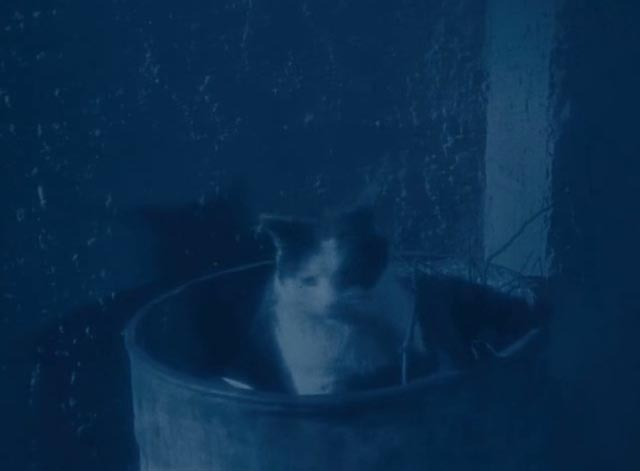 The Lodger - multi-colored cat sitting in bucket