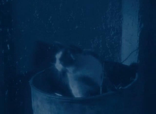 The Lodger - multi-colored cat still sitting in bucket