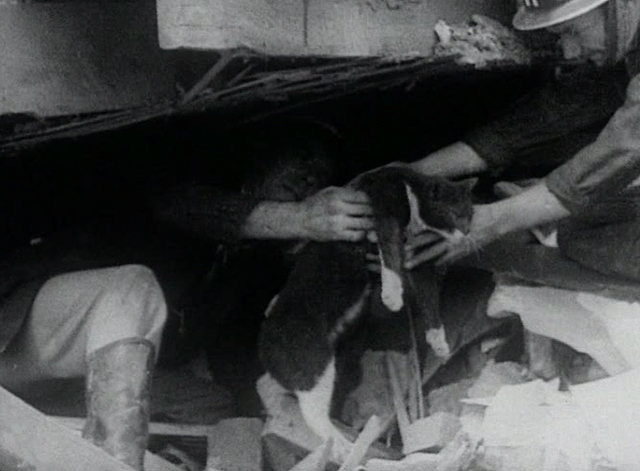 London Can Take It! - gray and white cat being rescued from destroyed building by air raid wardens