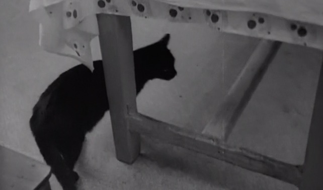 Love Affair or the Case of the Missing Switchboard Operator - black cat underneath table