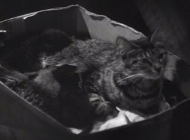 Love Begins at Twenty - tabby cat Sue and kittens in cardboard box