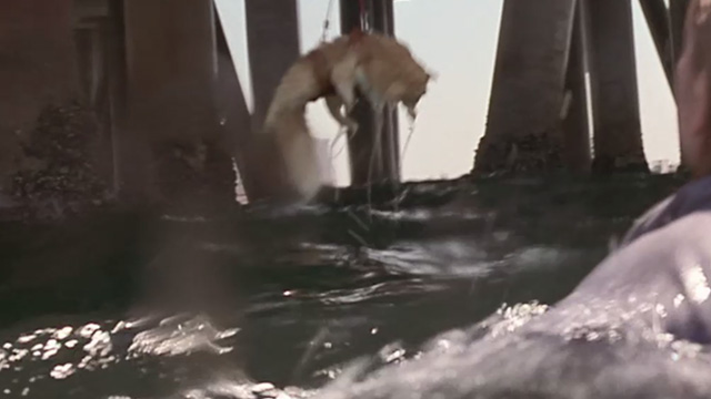 Love Stinks - fake longhaired ginger tabby Gracie dangling over water at end of pier