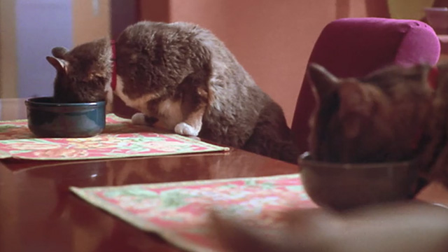 Love Stinks - cats eating at table