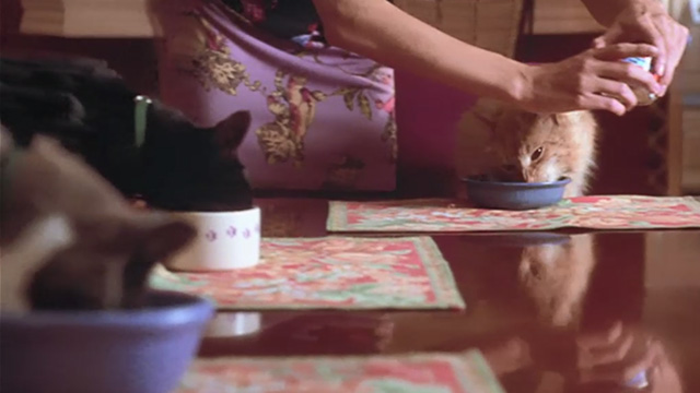 Love Stinks - longhaired ginger tabby Gracie eating at table with other cats