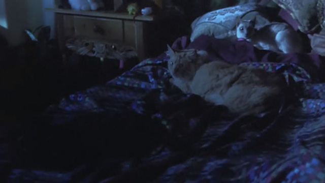 Love Stinks - longhaired ginger tabby Gracie and Siamese cat on bed in dark