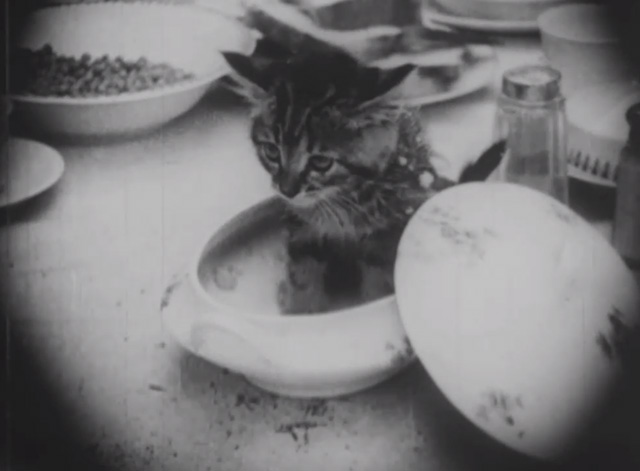 Madcap Ambrose - tiny tabby kitten sitting in dish
