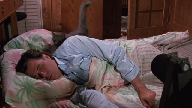 Madhouse - long-haired gray cat Scruffy on bed with Mark John Larroquette