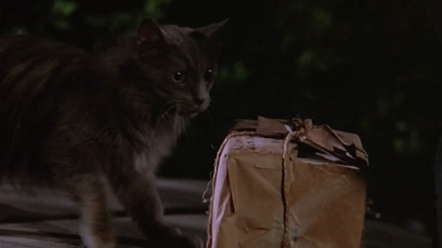 Madhouse - long-haired gray cat Scruffy approaching box wrapped in brown paper