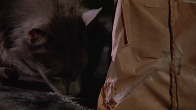 Madhouse - long-haired gray cat Scruffy sniffing white powder from box wrapped in brown paper