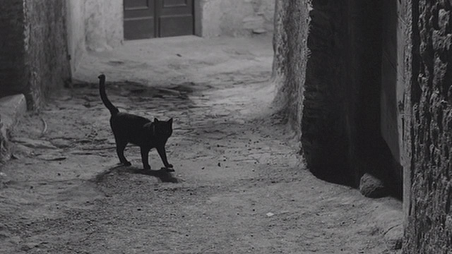 Mafioso - black cat standing in middle of street