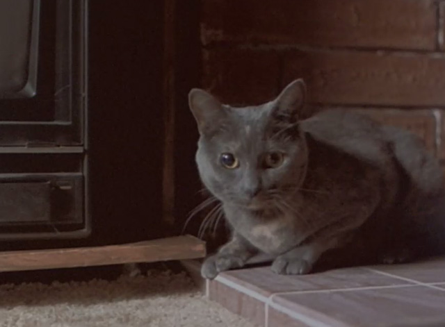 Malicious - gray cat sitting on fireplace bricks