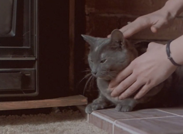 Malicious - gray cat being petted on fireplace bricks