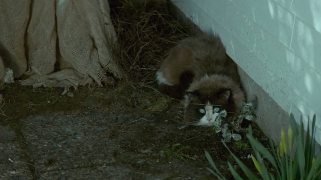 A Man Called Ove - Ragdoll cat crouched next to house