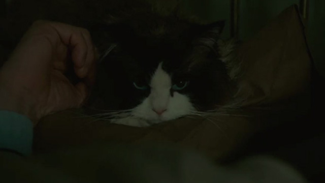 A Man Called Ove - Ragdoll cat lying on bed