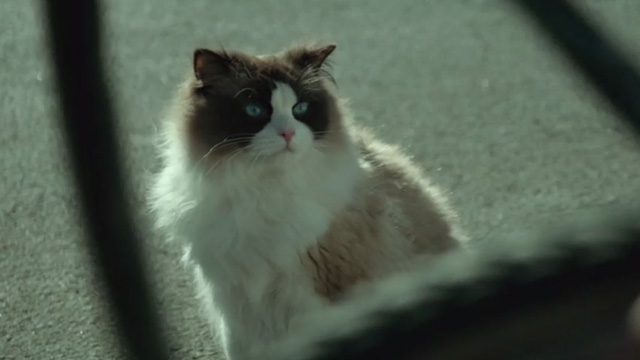 A Man Called Ove - Ragdoll cat being watching Ove work