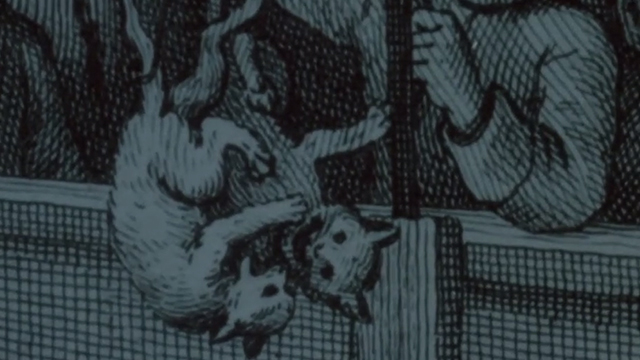 Man's Best Friend - drawing of cats being thrown into ring