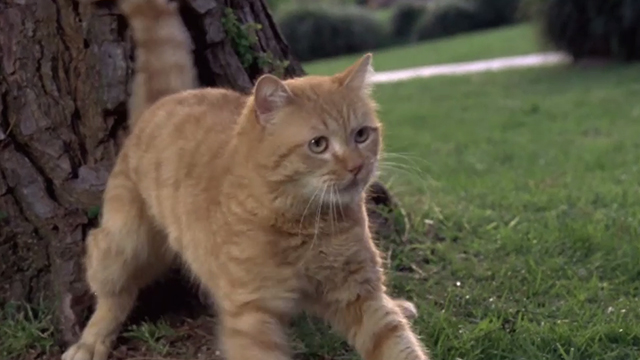 Man's Best Friend - ginger tabby cat Boo by tree