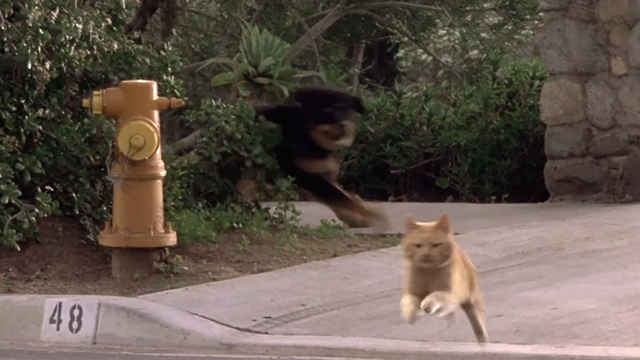 Man's Best Friend - ginger tabby cat Boo being chased by dog Max