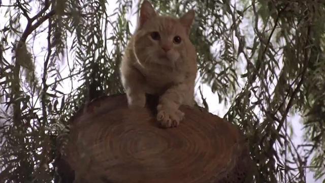 Man's Best Friend - ginger tabby cat Boo at top of tree