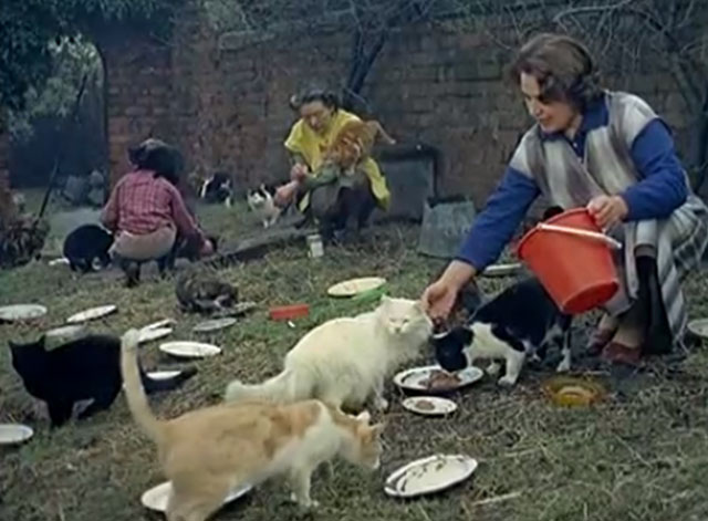 multiple cats being fed on lawn by women and boy