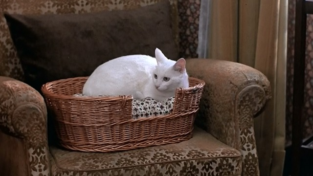 The Man Who Loved Women - white cat sitting in basket on chair