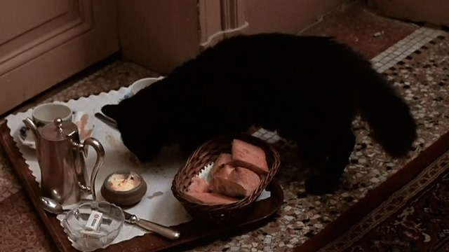 The Man Who Loved Women - black cat eating food from tray outside hotel room