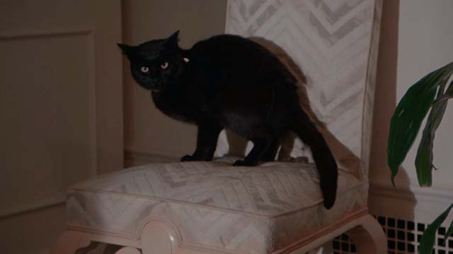 The Man With Two Brains - Tblack cat standing on chair