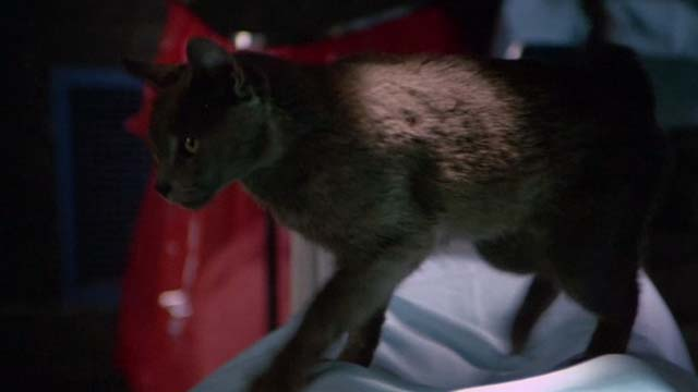 The Man With Two Brains - grey cat on top of patient in surgery