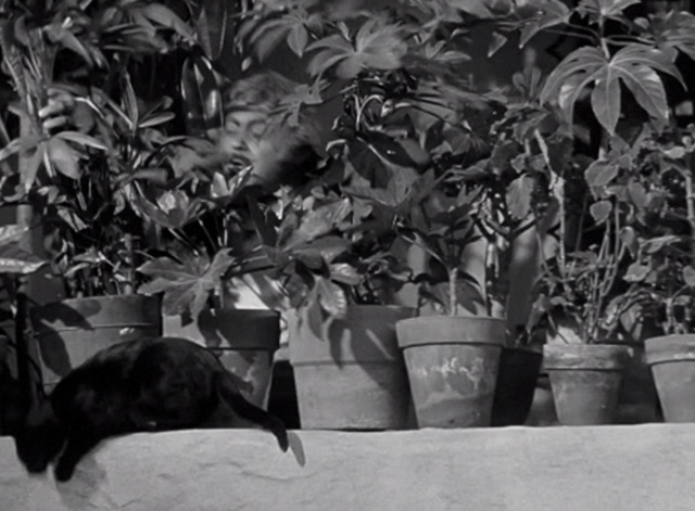 The Mark of Zorro - black cat about the jump off wall as Don Luis Quintero J. Edward Bromberg approaches