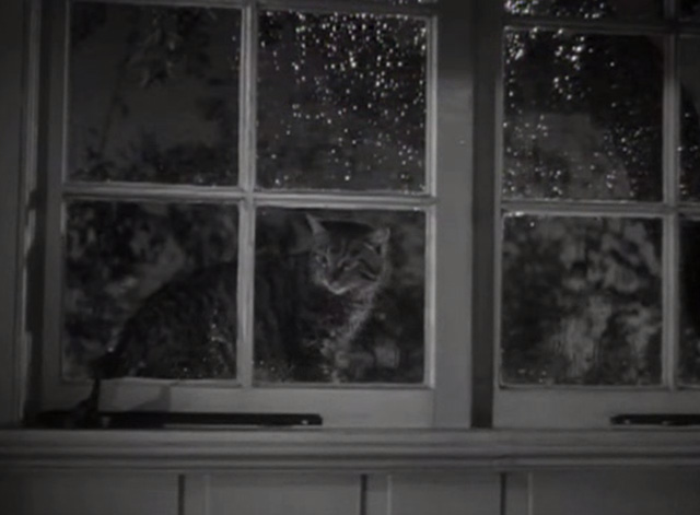 Marriage is a Private Affair - tabby cat Duke outside window