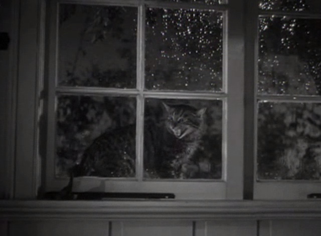 Marriage is a Private Affair - tabby cat Duke meowing outside window