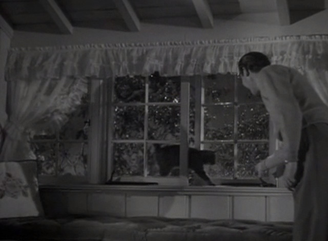 Marriage is a Private Affair - Tom John Hodial letting tabby cat Duke in through window window